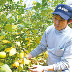 高校生がインタビュー:大崎上島の農業~若手を見守る匠